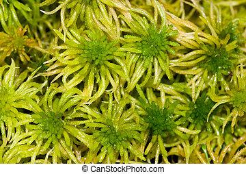 green moss on a bog