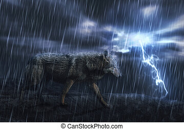 wet grey wolf on the rock