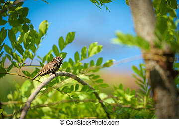 wet lonely sparrow in the summer and warm weather hang on to tree branch with blur orange sky background.