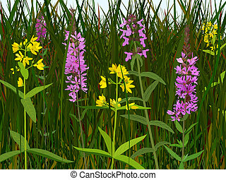 Wet meadow flowers - Three species of wet meadow flowers:...
