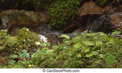 moss in front of stream