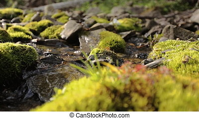Wet mossy stone under small runner stream, close up view
