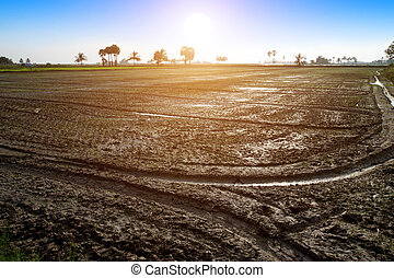 wet ploughed rice field