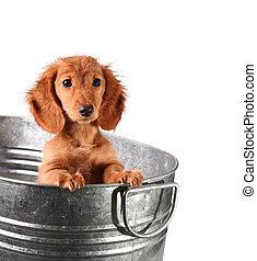 Wet puppy in a bucket