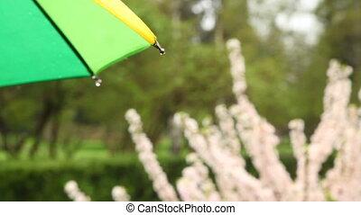 Wet rain umbrella in background shrub with flowers -...