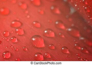 Wet red petal 2