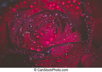 Wet Red Rose Grunge Macro