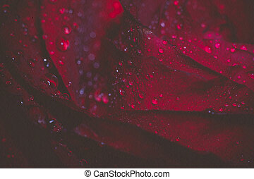 Wet Red Rose Grunge Macro