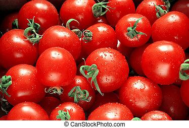 wet red tomatoes taken closeup.