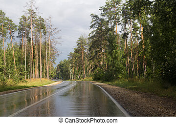 Wet road in the forest after the rain