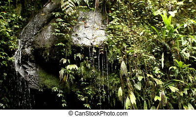 Wet rocks in cloud forest