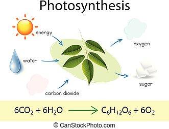 wetenschap, opleiding, photosynthesis