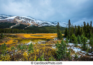 Wetland at the foot of the snow-capped mountains. Yellow ...