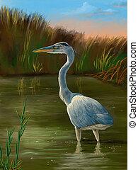 Wetland birds, blue heron - Blue heron fishing in a pond....