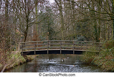 Wetland Bridge  - Wooden Bridge in a wetlands park.
