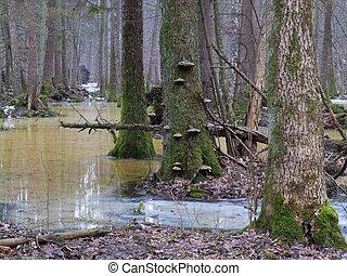 wetland, floresta, springtime, manhã