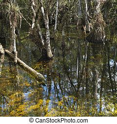 Wetland, Florida Everglades.