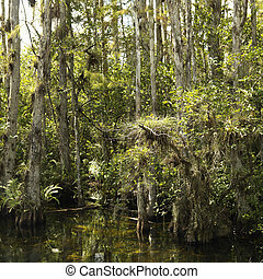 Wetland, Florida Everglades.
