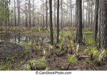 Wetland Forest at Tarkiln Bayou Preserve State Park in...