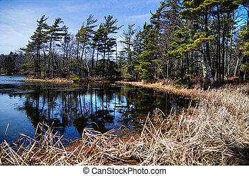 Wetland Habitat - Shores of a protected wilderness wetland....