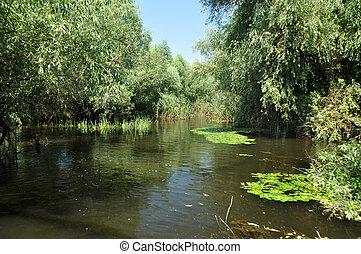 Wetland in Danube delta, Romania