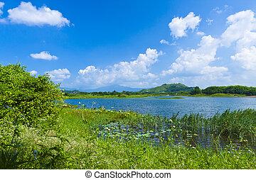 Wetland lake landscape