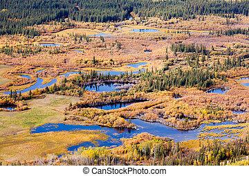 Wetland marsh ponds fall boreal forest taiga Yukon - Aerial...