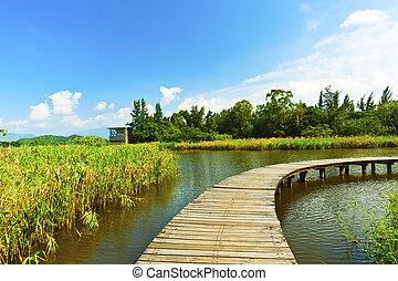 Wetland park and pond in Hong Kong