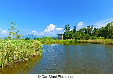 Wetland pond at day in Hong Kong