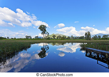 Wetland pond at day time