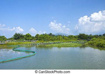 Wetland pond in Hong Kong at day