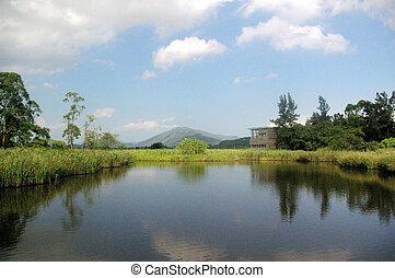 Wetland pond in Hong Kong