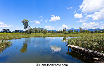 Wetland pond in sunny day
