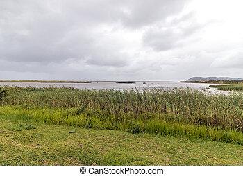 Wetland Vegetation at the Saint Lucia Estuary - Landscape...