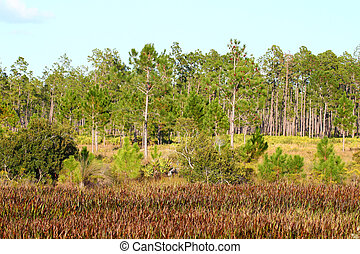 Wetland Vegetation - Florida - Spring wetland scene from...