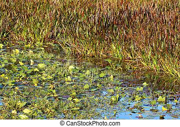Wetland Vegetation - Florida