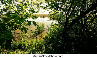 Wetland view from Forest - Wetland view from forest at...