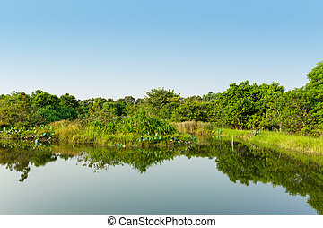 Wetland with blue sky