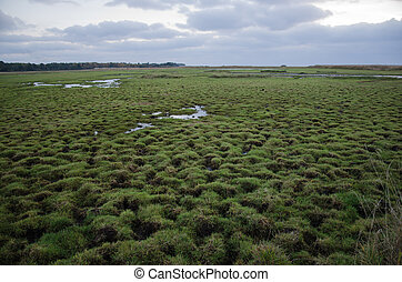 Wetland with green patterns