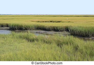 wetlands, conservazione, virginia