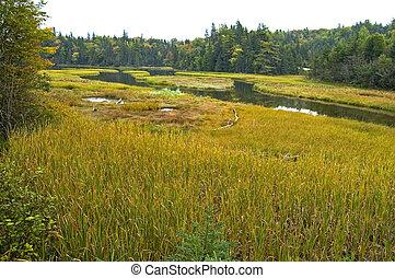 Wetlands, Cape Breton Island, Nova Scotia, Canada