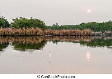 Wetlands of the wildlife reserve Biotopo Monterrico-Hawaii, ...