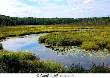 Wetlands landscape in Algonquin provincial park, Canada
