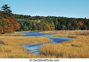 wetlands - Autumn shot of marshy wetlands