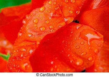 wett poppy
