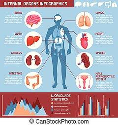 wewnętrzne organa, ludzki, infographics