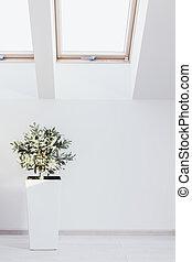 wewnętrzny, houseplant, biały