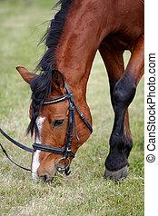 wezen, paarde, gegraasde, sporten