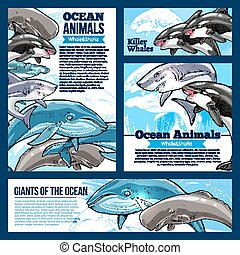 Whale and shark ocean animal banners
