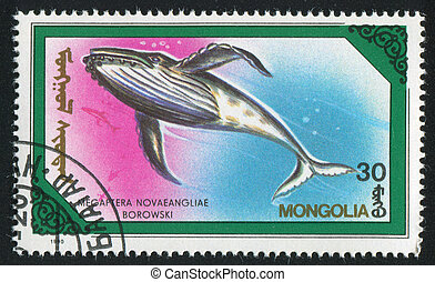 whale Megaptera novaeangliae - MONGOLIA - CIRCA 1990: stamp...